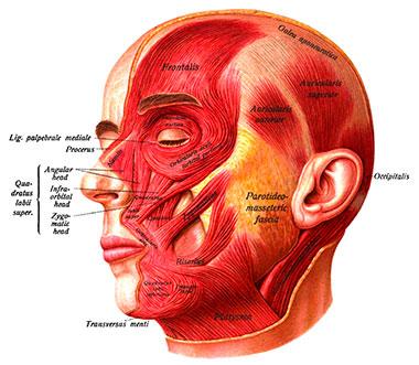 Oštećenje nerava - Bellova paraliza