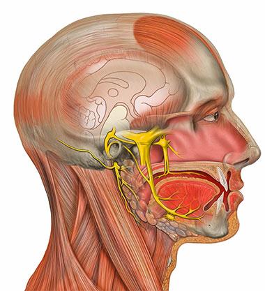 Oštećenje nerava - Neuralgija n.trigeminusa